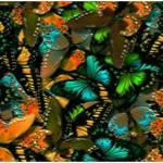 """""""Butterfly Garden"""" by eboyce"""