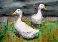 Ozzie and Harriet, White Duck Watercolor Painting