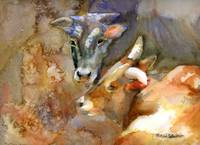 Friends, Watercolor Painting of Cows and Bulls, Bo