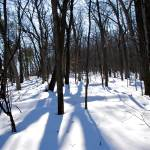 """""""Shadows and Snow: 053 of 365"""" by Keppyslinger"""