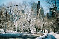 Central Park Winter Road