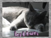 mah kittie Kitten. 2010