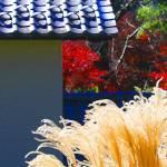 """""""Autumn Grass"""" by VAphotoart"""