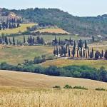 """Tuscany Panorama"" by kimmanleyort"
