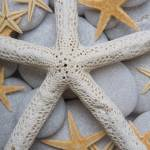 """Starfish on Pebbles"" by Spanishalex"