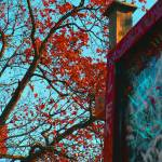 """Fall"" by AdamSteinbok"