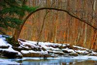 streamside snow