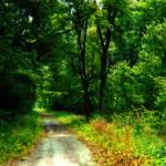 """""""Woodland"""" by eboyce"""