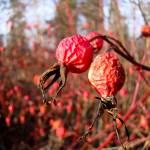 """November Nature (1 of 18)"" by jclossphoto"