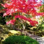 """""""Tenryu-ji Temple Autumnal colors"""" by OneMansPerspectives"""