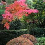 """""""Gardens, Koto-in Zen Temple, Kyoto, Japan"""" by OneMansPerspectives"""