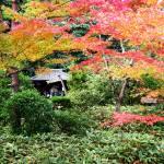 """""""Koto-in Zen Te Gardens, Kyoto"""" by OneMansPerspectives"""