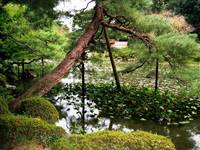 Pond garden Heian Shrine