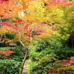 """""""Gardens, Koto-in Zen Te"""" by OneMansPerspectives"""