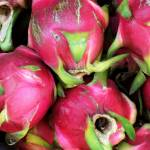 """0400 Cambodia Jan2008_Siem Reap_Dragon Fruit in th"" by OneMansPerspectives"