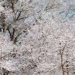 """""""winter wonderland"""" by imagineit"""