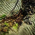 """Ocean Bouquet"" by singularscenes"