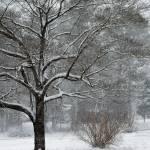 """winter snow day"" by imagineit"