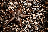 Stranded Sea Star
