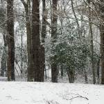 """snowy woods"" by imagineit"