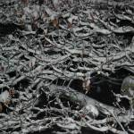 """""""snowy branches"""" by imagineit"""