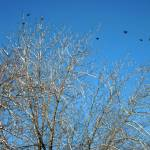 """birds in flight in winter"" by candicecruzphotography"