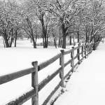 """Winter Snow in Texas"" by miir"