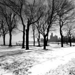 """Snow Grove"" by F-StopPhotos"