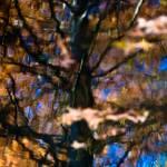 """Autumn Impressions"" by singularscenes"