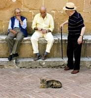 Three men and a cat