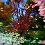 """Autumn Impressions 2"" by singularscenes"