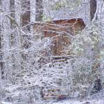 """TheTree House In The Forest 111"" by photographybydonna"