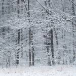 """Snow Laiden Forest 116"" by photographybydonna"