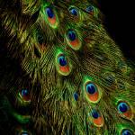 """""""Peacock Waterfall"""" by singularscenes"""