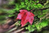 Fall Leaves by Jim Crotty 11