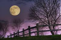 November Moon by Jim Crotty