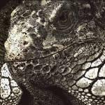 """""""Iguana - Pastel"""" by aart2000"""