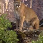 """Cougar and Pictographs - Pastel"" by aart2000"