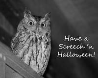 Have a Screech 'n Halloween