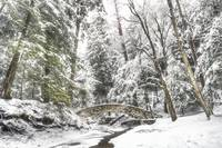 February Snowstorm in Hocking Hills by Jim Crotty