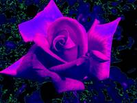 Astral Blue Rose