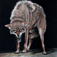 """Coyote  painting"" by DiDi Higginbotham"