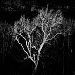 """Winter Elm Tree"" by bavosiphotoart"