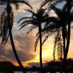 """""""Dancing palms"""" by rbb2676"""