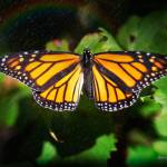 """Butterfly and Rainbow"" by johncorney"
