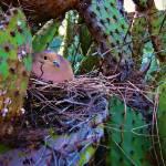 """""""nesting dove"""" by MelanieDoty"""