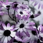 """I Love Flowers"" by Kemaha"