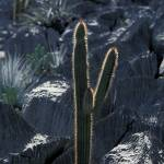 """Cactus in limestone_RS0033"" by brazilphotos"