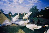 Flying Swans Dream