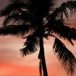 """""""Tropical Sunset"""" by shanepinder"""